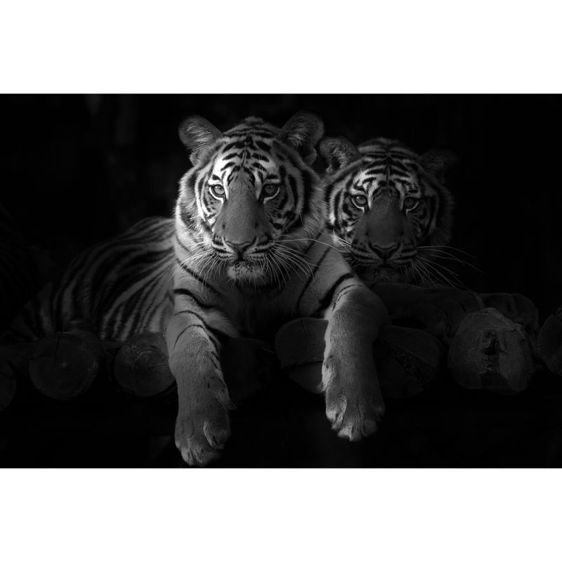 Alu Art Tiger black&white mat